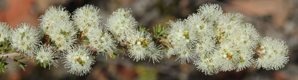 White Flower List