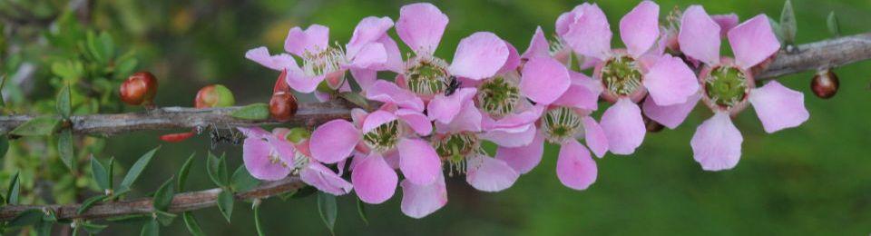 Pink Flower List